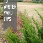 10 winter yard tips