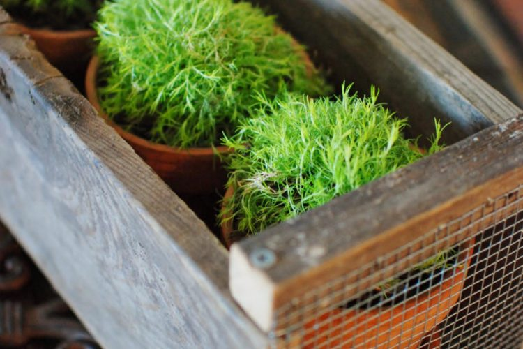 Farmhouse Crate Inspired by Magnolia Market