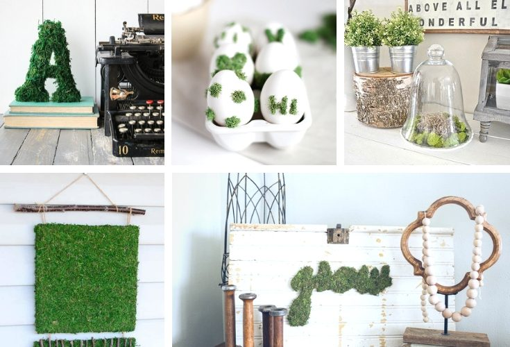 Fun Ways To Use Moss In Your Decor