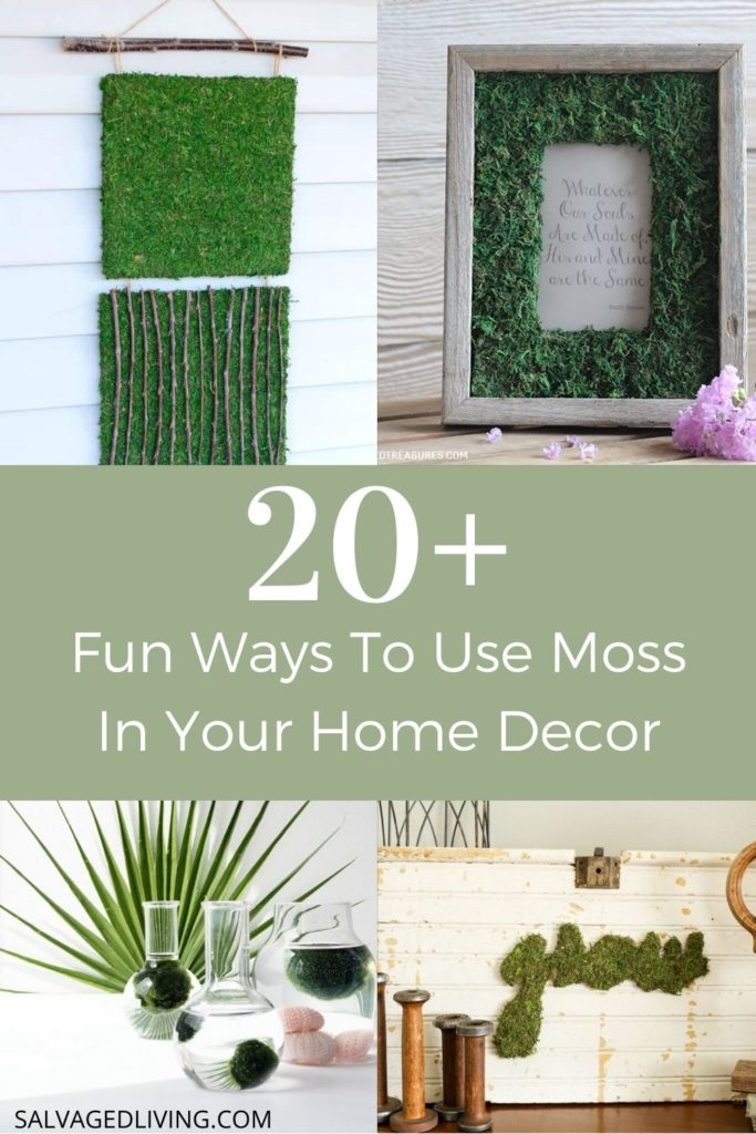 20+ fun ways to use moss in your home decor