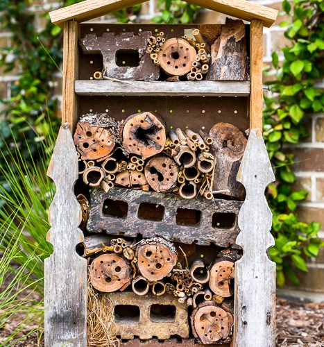 DIY Bug House Scrap Wood Project