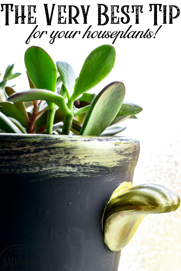 This simple tip will help you learn how to care for your indoor plants. Houseplant care can be hard, espceially learning how to water your plants. I have a plant saving tip you will want to try ASAP , perfect for the beginner plant lady. #plantlady #plantcaretips #watertips #easyplantcare #housplanttips