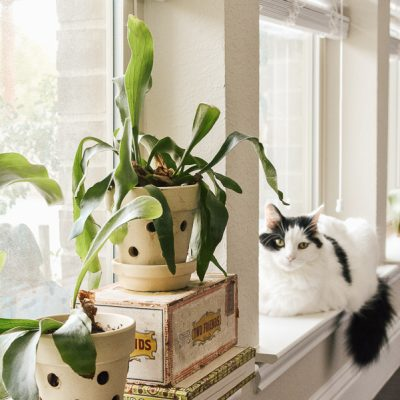 My Indoor Plant Care Tip