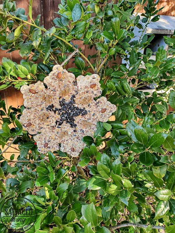 This edible glue is easy to make and use to decorate bird seed birdhouses or bundt pan suets. Make beautiful yard art that the birds will love and make your yard a wildlife wonderland! #birdfeeder #decorativebirdhouse #feedthebirds