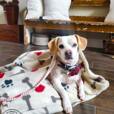 DIY Dog Bed With Blanket Burrow