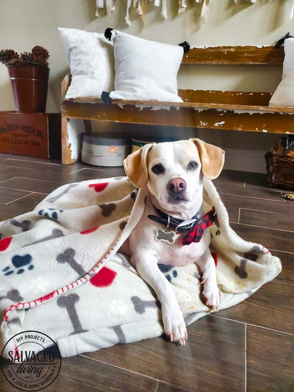 Learn how to make a DIY dig bed with a burrow blanket attached for your small dog. This is the most budget friendly dog bed you will find and my little dog loves to burrow and nest in the blanketed dog bed. #dogbedDIY #nesteddogbed #petburrowbed #DIYpetbed