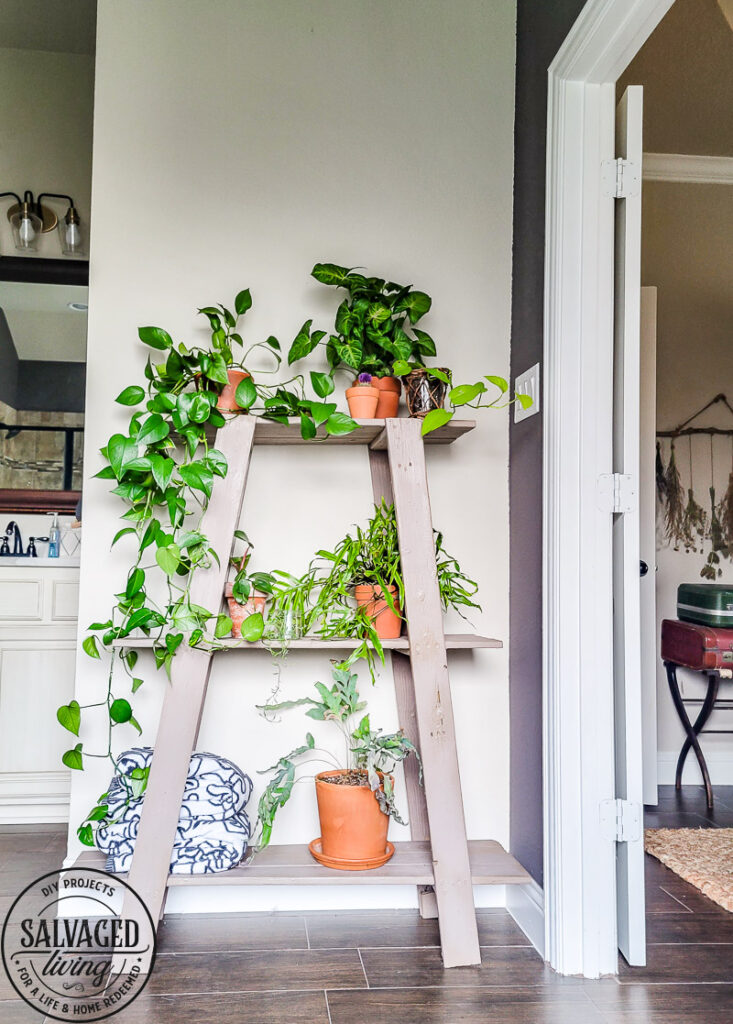 Found this shelf at a garage sale and turned it into a stunning plant shelf for my bathroom. This thrifted shelf makeover is proof good bones are all you need to turn trash to treasure! #paintedfurniture #thriftedmakeover #plantstand #plantlady